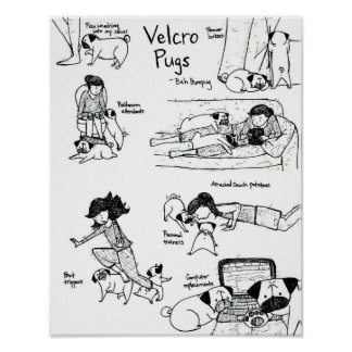 Velcro Pugs Posters