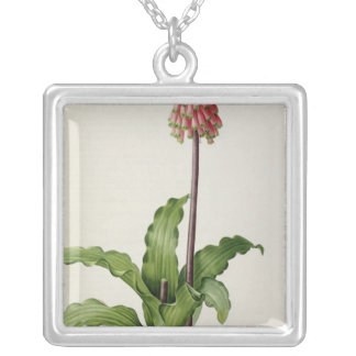 Veltheimia Capensis, from `Les Liliacees', c.1805 Silver Plated Necklace