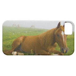 veneto italy 2 iPhone 5 cases