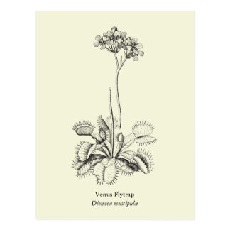 Venus Flytrap, Carnivorous Plant Postcard