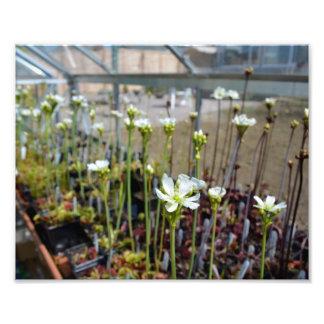 Venus Flytrap Flowers Photographic Print