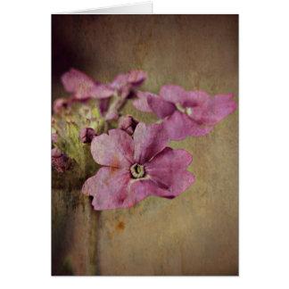 Verbena Delicate Pink Floral. Card