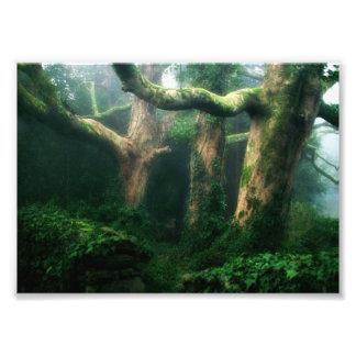 Verdant forest photo print