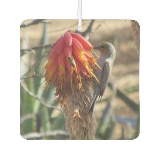 Verdin on Aloe Blossom