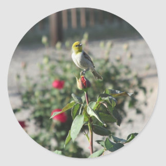 Verdin on Rosebud Sticker