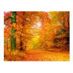 Vermont Autumn Nature Landscape Postcard