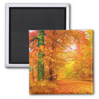 Vermont Autumn Nature Landscape Square Magnet