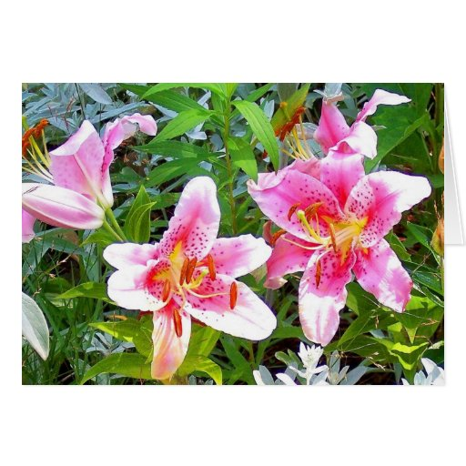 Vermont Lilly Greeting Card