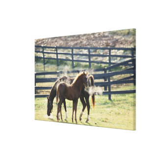 Vermont, USA Canvas Print