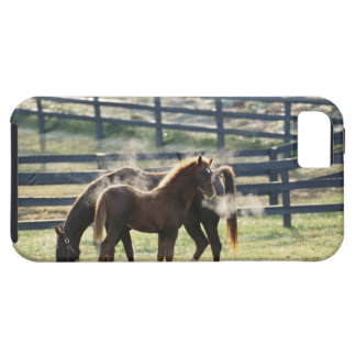 Vermont, USA iPhone 5 Covers