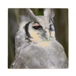 Verreaux's Eagle-Owl (Bubo Lacteus), Gauteng Wood Coaster