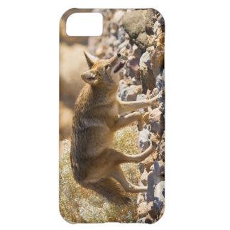 Versatile Carnivore iPhone 5C Case