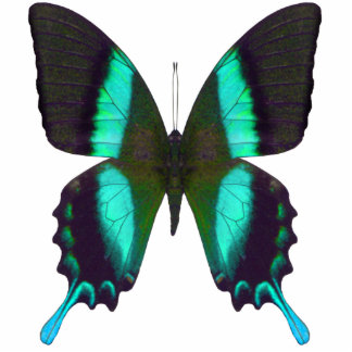 Versatile Majestic Green Swallowtail Butterfly Photo Sculpture Badge