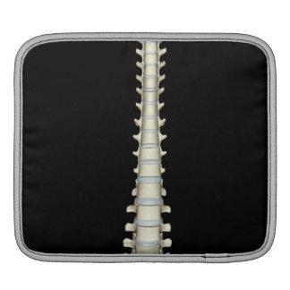 Vertebral Column 2 iPad Sleeve