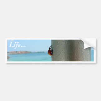 Vertical Ladybug Car Bumper Sticker