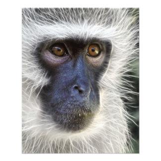 vervet-monkey-275013  vervet monkey monkey female 11.5 cm x 14 cm flyer