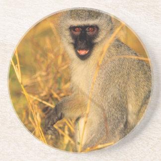 Vervet Monkey (Chlorocebus Pygerythrus) Coaster