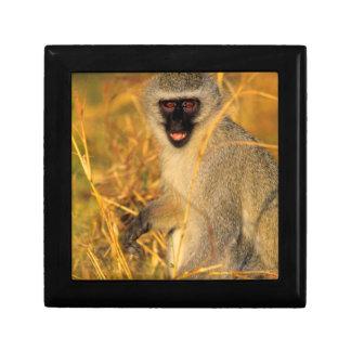 Vervet Monkey (Chlorocebus Pygerythrus) Gift Box