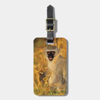 Vervet Monkey (Chlorocebus Pygerythrus) Luggage Tag