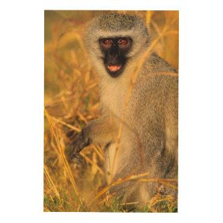 Vervet Monkey (Chlorocebus Pygerythrus) Wood Print