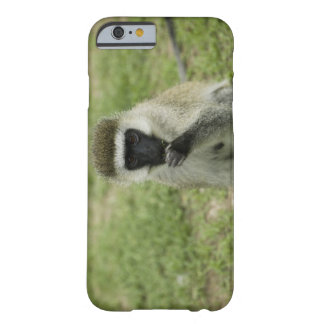 Vervet monkey eating, Africa Barely There iPhone 6 Case
