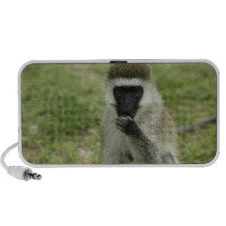 Vervet monkey eating, Africa iPod Speaker