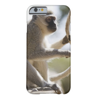Vervet monkey holding tail barely there iPhone 6 case