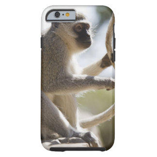 Vervet monkey holding tail tough iPhone 6 case