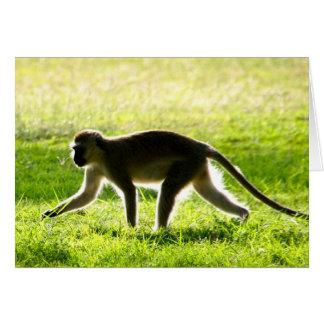 Vervet Monkey Morning Card
