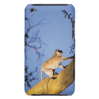 Vervet monkey on tree branch , Serengeti iPod Touch Cover