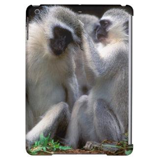 Vervet Monkey's (Cercopithecus Aethiops)