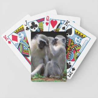 Vervet Monkey's (Cercopithecus Aethiops) Bicycle Playing Cards