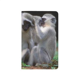 Vervet Monkey's (Cercopithecus Aethiops) Journal