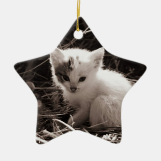 Very cute black and white kitten sat in straw ceramic star decoration