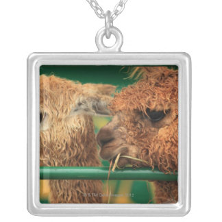 very cute lamas both looking at something off silver plated necklace