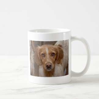 Very Cute Young Liver And White Working Type Engli Coffee Mug