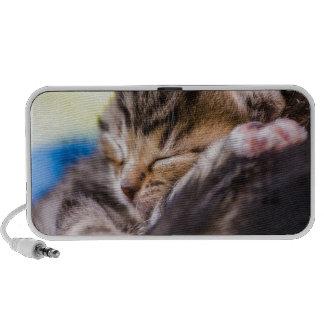 very young cat sleeping notebook speakers