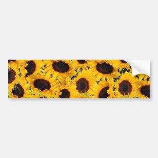 Vibrant Beautiful Sunflowers Nature Floral Prints Bumper Stickers