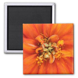"Vibrant ""Blooming 7"" Orange Flower Square Magnet"