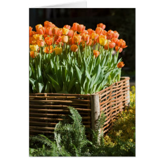 Vibrant blooming tulips card