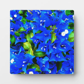 Vibrant Blue Bougainvillea Flowers Plaque