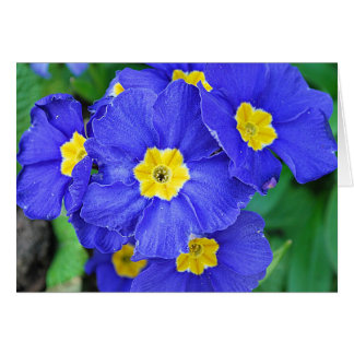 Vibrant Blue Greeting Cards