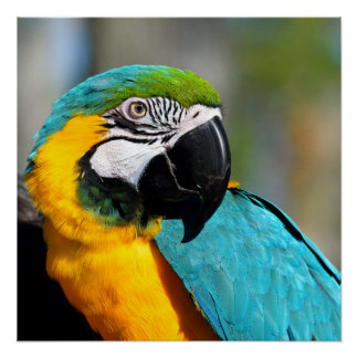 Vibrant Color Macaw Poster