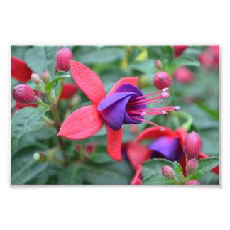 Vibrant Flower Art Photo