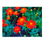Vibrant flowers post card