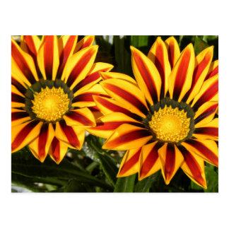 Vibrant flowers postcard