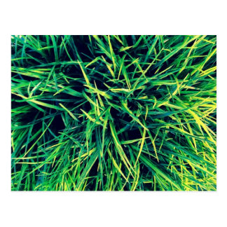 Vibrant grass postcard