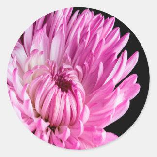 Vibrant in Pink Dahlia Classic Round Sticker