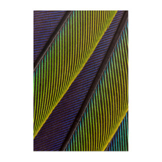 Vibrant Jenday Conure Feather Abstract Acrylic Print