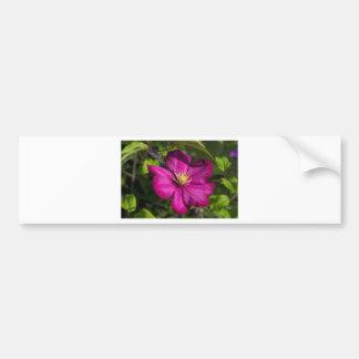 Vibrant Magenta Pink Clematis Blossom Bumper Sticker